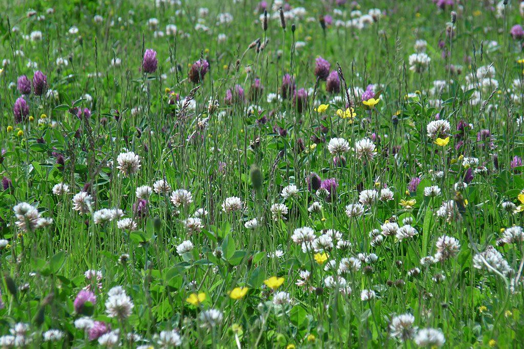 Bloemrijk grasland mengsel
